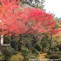 写真: IMG_7637西明寺・いろは紅葉