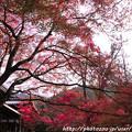 写真: IMG_7645西明寺・いろは紅葉