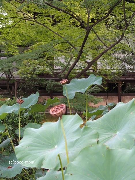 Photos: 広隆寺 P9230987