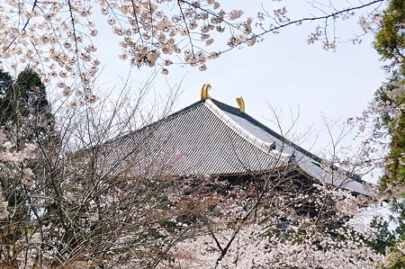 春の東大寺大仏殿2010年04月04日_DSC_1257