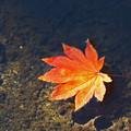 水上の落葉