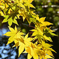 写真: 黄葉映える