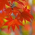 写真: 秋の彩(紅葉)