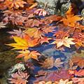 写真: 木の葉散る