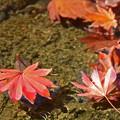 写真: 秋の名残