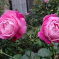 写真: 2sofis29101301 (3) (1280x960)