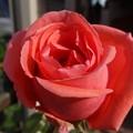 写真: 5hamon29112401 (2) (1280x960)
