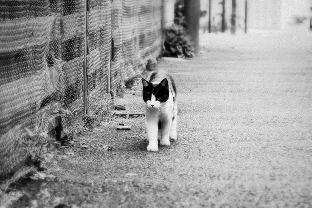 猫撮り散歩1861