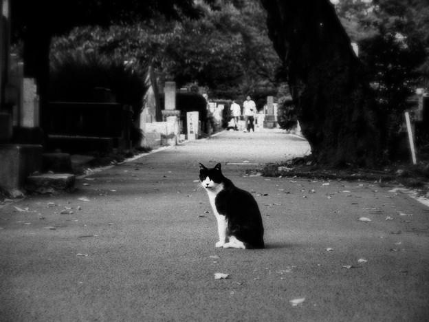猫撮り散歩1920