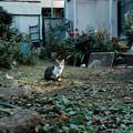 写真: 猫撮り散歩1924