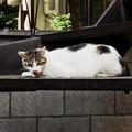 写真: 猫撮り散歩1925
