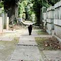 写真: 猫撮り散歩1928