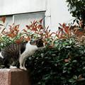 写真: 猫撮り散歩1948