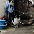 写真: 猫撮り散歩1952