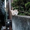 写真: 猫撮り散歩1954