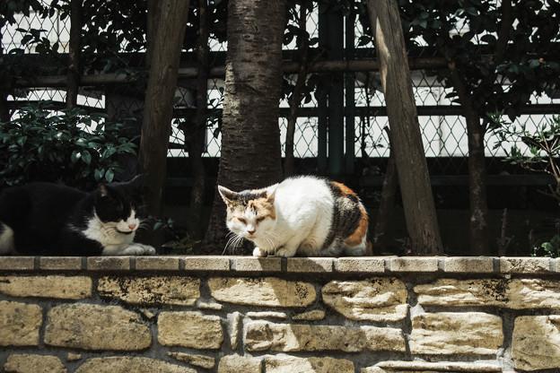猫撮り散歩1982