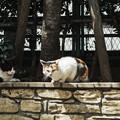 写真: 猫撮り散歩1982