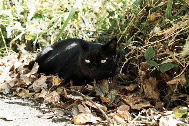 猫撮り散歩1986