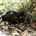 写真: 猫撮り散歩1986