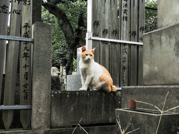 写真: 猫撮り散歩1987