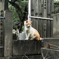 猫撮り散歩1987