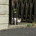 写真: 猫撮り散歩1988