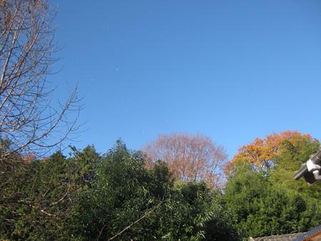 強風で裏山から葉っぱがヒラヒラ の巻
