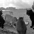 Photos: 捨て猫の浜