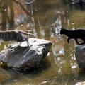 Photos: 猫の飛び物