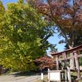 秋の蛟もう神社