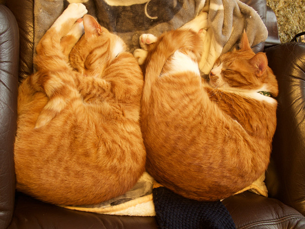 synchronized cats