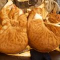 Photos: synchronized cats