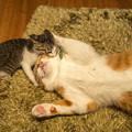 Photos: フレッド・ブラッシー仔猫
