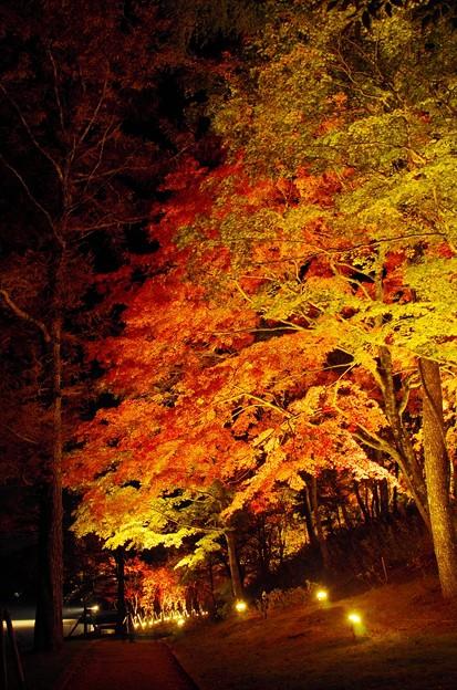 2014富士山麓の秋148「山中湖紅葉ライトアップ」