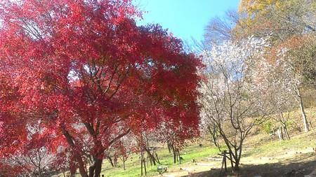 20141123城峯公園ドライブ (6)