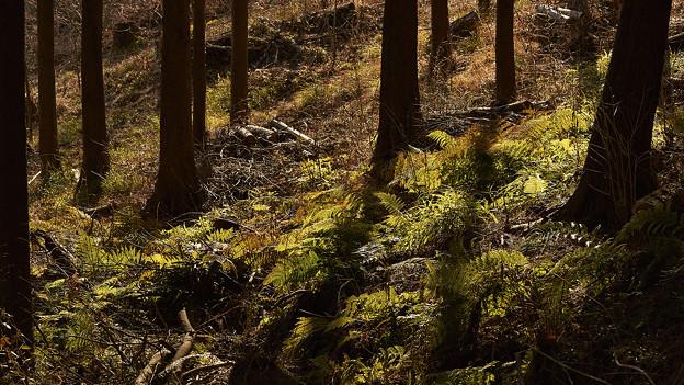 木漏れ日の当たる場所