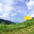 写真: 黄一輪