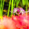 写真: ピンク色