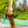 Photos: 木彫り