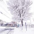 写真: 雪の路地