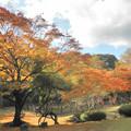 Photos: 庭園の色とりどりの紅葉
