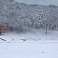 Photos: 雪原疾走。