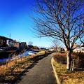 写真: 150201 鶴見川