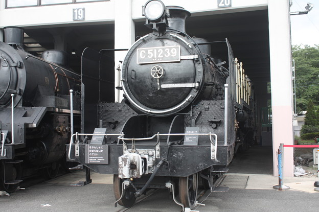 C51 239