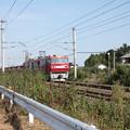 安中貨物 5094レ EH500-81牽引 (2)