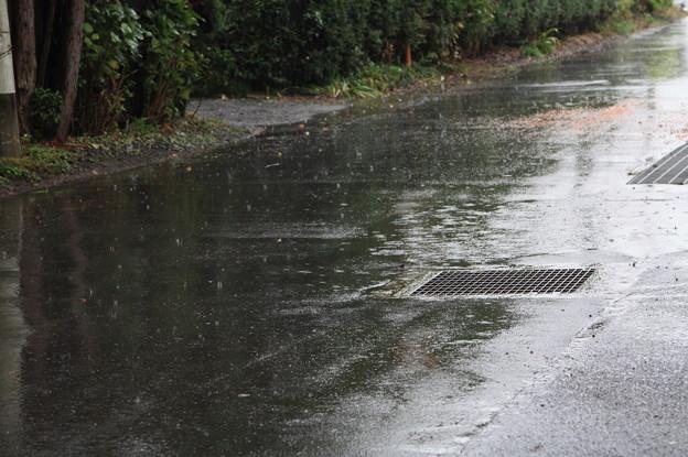 雨が降っている光景 (1)