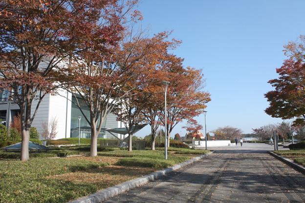 県庁前の赤葉