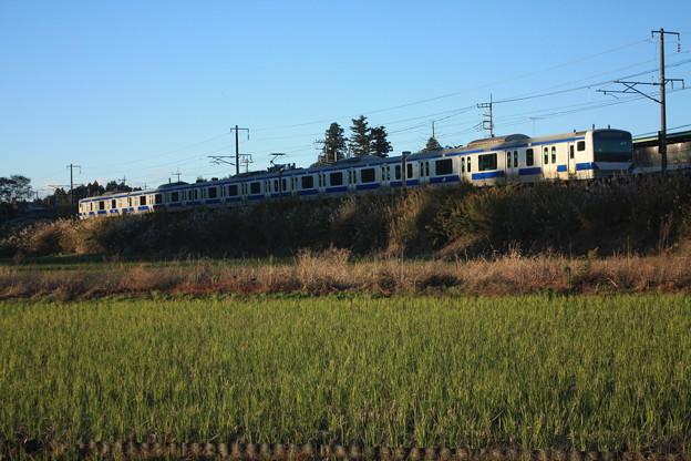 秋の田園風景を走りゆくE531系 (1)