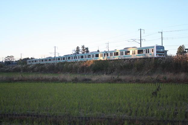 秋の田園風景を走りゆくE501系 (1)