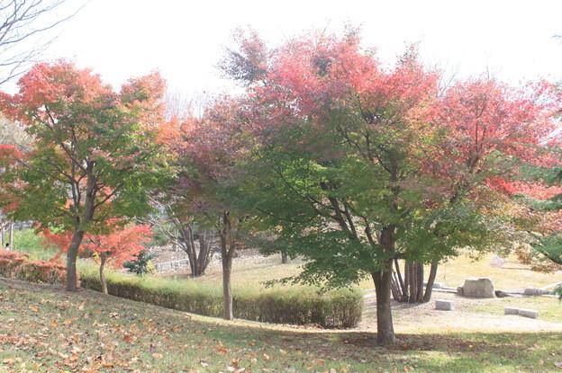 色づく紅葉 (3)